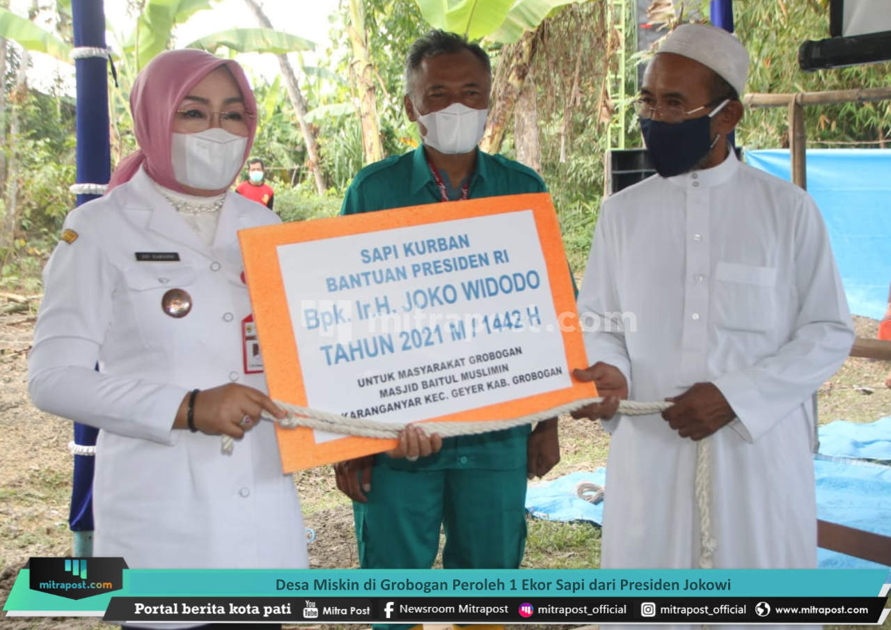 Desa Miskin Di Grobogan Peroleh 1 Ekor Sapi Dari Presiden Jokowi