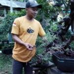 Kisah Petani Bonsai Dari Lereng Muria - Mitrapost.com