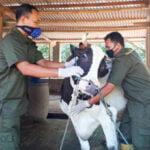 Dinperpa Pekalongan Akan Gelar Vaksinasi Rabies Dan Pengobatan Hewan Gratis