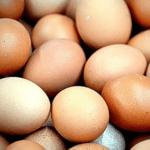 Ini Dalang Harga Telur Ayam Anjlok